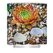 Agates And Cactus Shower Curtain