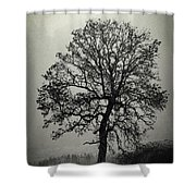 Age Old Tree Shower Curtain