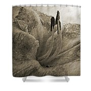 Aged Daylily Shower Curtain
