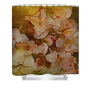 Aged Hydrangeas With Texture Shower Curtain