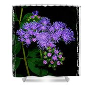 Ageratum Shower Curtain
