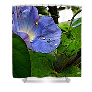Aging Morning Glory Shower Curtain