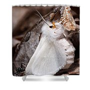 Agreeable Tiger Moth With Ant Shower Curtain