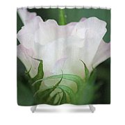Agriculture - Cotton Bloom Shower Curtain