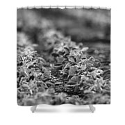 Agriculture- Soybeans 2 Shower Curtain