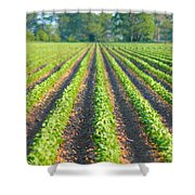 Agriculture-soybeans 5 Shower Curtain