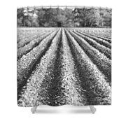 Agriculture-soybeans 6 Shower Curtain