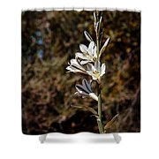 Ajo Lily Shower Curtain