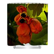 Akee Shower Curtain