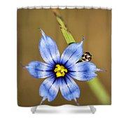 Alabama Blue-eyed Grass Wildflower - Sisyrinchium Angustifolium Shower Curtain
