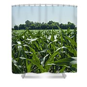 Alabama Field Corn Crop Shower Curtain