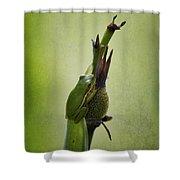 Alabama Green Tree Frog - Hyla Cinerea Shower Curtain