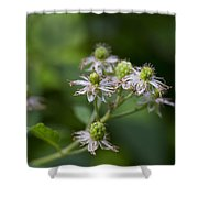 Alabama Wild Blackberries In The Making Shower Curtain
