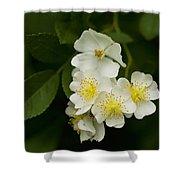 Alabama Wildflower Roses - Rosa Multiflora Shower Curtain