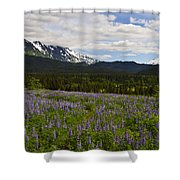 Alaska Lupine Shower Curtain