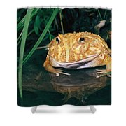 Albino Horned Frog Shower Curtain