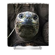 Aldabra Tortoise Shower Curtain