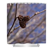 Alder Cones Shower Curtain