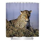 Alert Female Leopard Shower Curtain