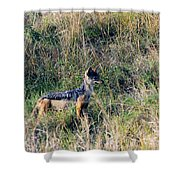 Alert Jackal Shower Curtain