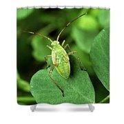 Alfalfa Plant Bug Shower Curtain