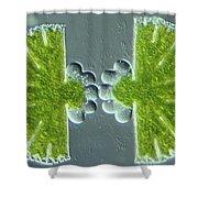 Algae Binary Fission Shower Curtain by M. I. Walker