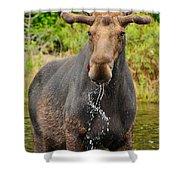 Algonquin Bull Shower Curtain