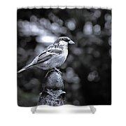 Alighten Shower Curtain