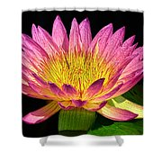 Alive With Color Shower Curtain