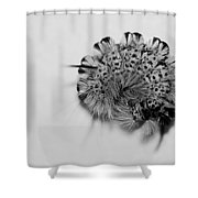 All Coiled Up Shower Curtain