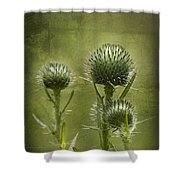 All Prickles And Stings Shower Curtain