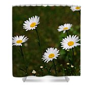 All The Dasies Shower Curtain