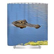 Alligator Afloat Shower Curtain