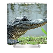 Alligator Cameron Prairie Nwr La Shower Curtain