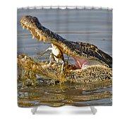 Alligator Get Lunch Shower Curtain