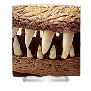 Alligator Skull Teeth Shower Curtain