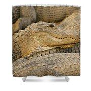 Alligators Shower Curtain