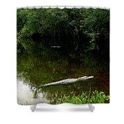 Alligators In The Evergaldes Shower Curtain
