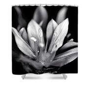 Allium Mono Shower Curtain