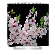 Almond Blossom 0979 Shower Curtain