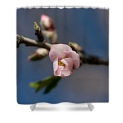Almond Blossom Shower Curtain