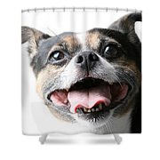 Almost A Jack Russell Shower Curtain