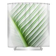 Almost Shower Curtain by Carolyn Marshall