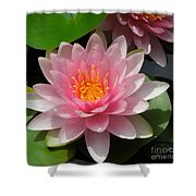 Almost Two Pink Water Lilies Shower Curtain