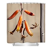 Aloe Flower And Stem Shower Curtain