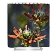 Aloe Vera Blossoms  Shower Curtain