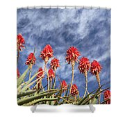 Aloes South Africa Shower Curtain