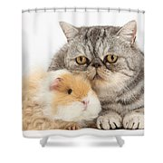 Alpaca Guinea Pig And Silver Tabby Cat Shower Curtain