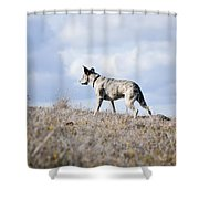 Alpha Dog Shower Curtain