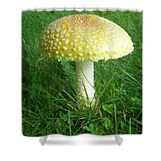 Amanita Muscaria - Guessowii Mushroom Shower Curtain